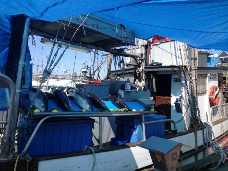 Thunfisch direkt vom Boot
